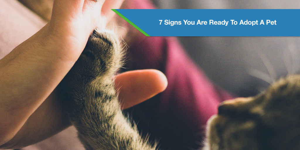 7 Signs You Are Ready To Adopt A Pet